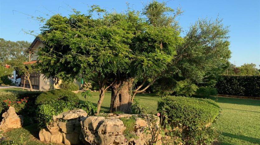 altro particolare del giardino della villa con piscina